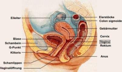 erotik massage bruder alte strumpfhosen xnxx