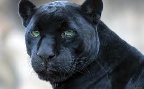 Ringelnatz gedichte panther